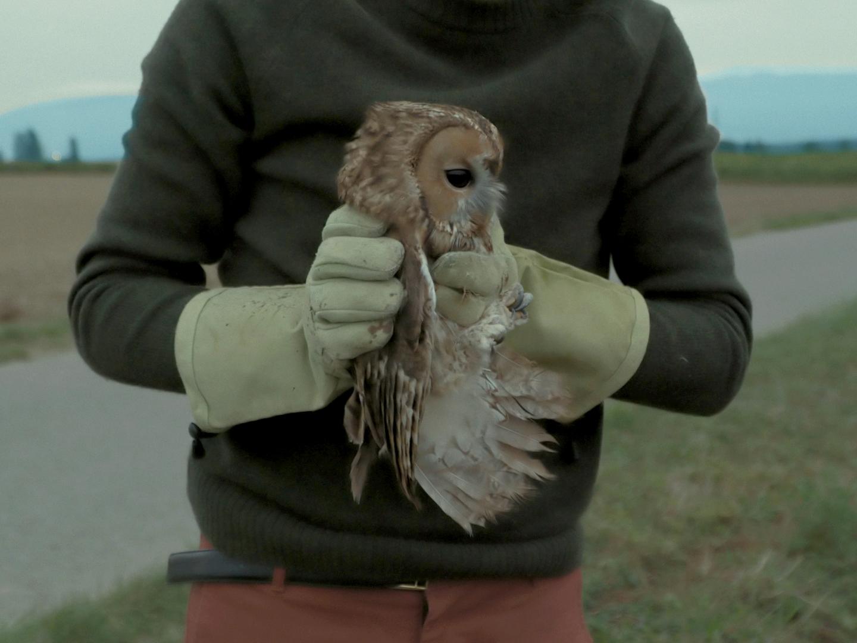shellac-lile-aux-oiseaux-image-3338-copyright-shellac.jpg