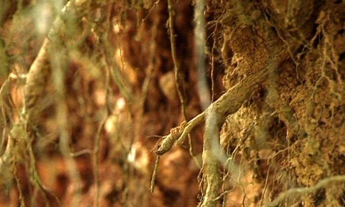shellac-racines-image-3017-copyright-shellac.jpg